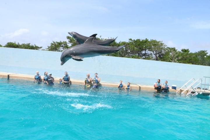 gulf-world-dolphins-jump2