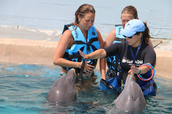 gulf-world-dolphinsswim-trainer-commands
