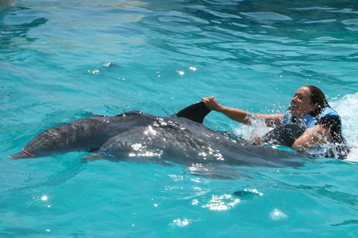 gulf-world-dolphinswim-finride-aaron-5