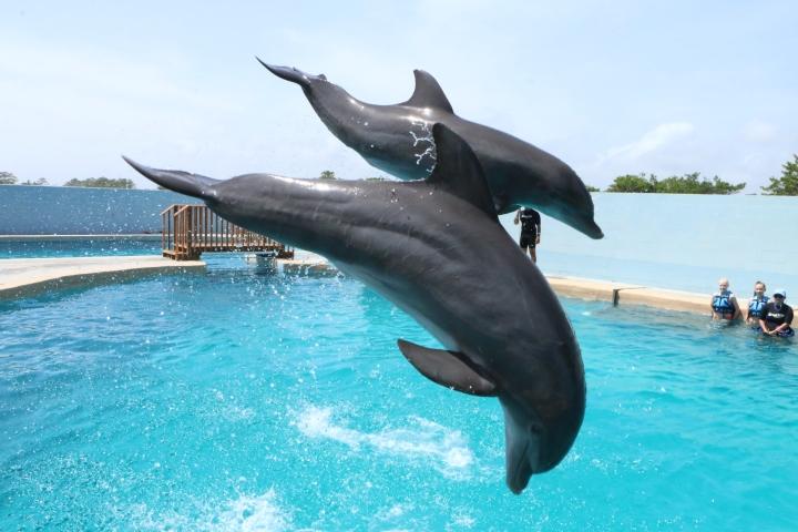 gulfworld-dolphinvip-doplphin-jumb-pcb-june-2017